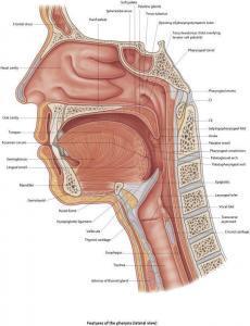 mouth pharynx eviasis